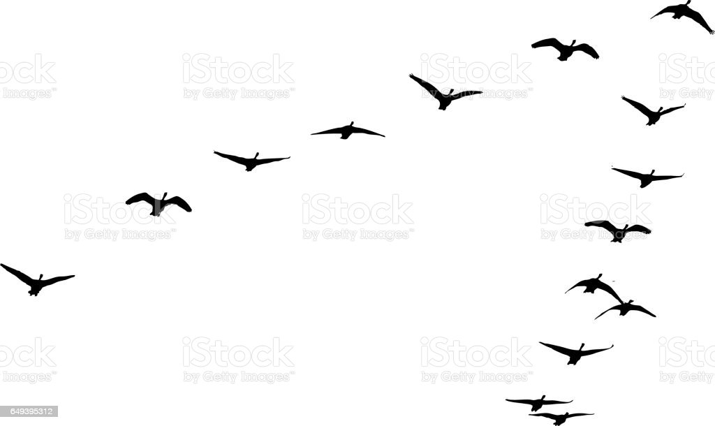 Flock of Canada Geese flying in formation vector art illustration