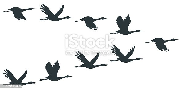 Cranes or stork silhouette vector icon set.