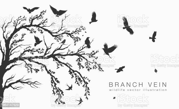 Flock of flying birds on tree branch tree vector id954142520?b=1&k=6&m=954142520&s=612x612&h=ddb05brwa7hohenvc5yhrmpevoka1betuw0zfjqaooe=