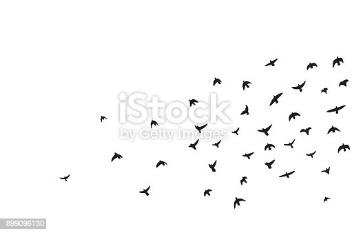 istock A flock of flying birds 899096130