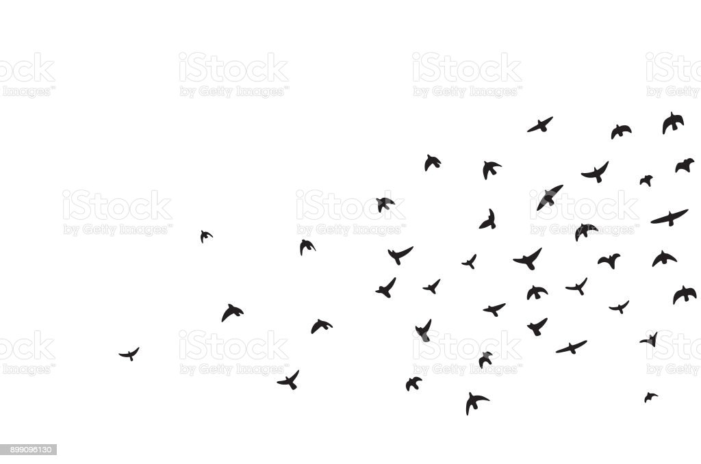 A flock of flying birds vector art illustration