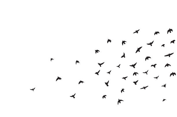 a flock of flying birds - birds stock illustrations