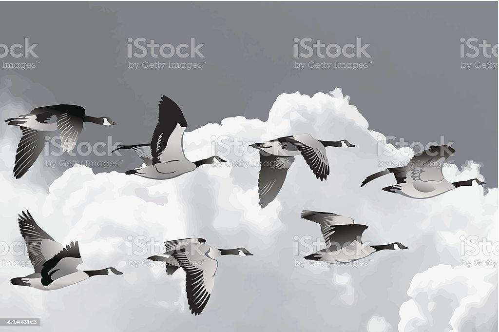 Troupeau d'oies - Illustration vectorielle
