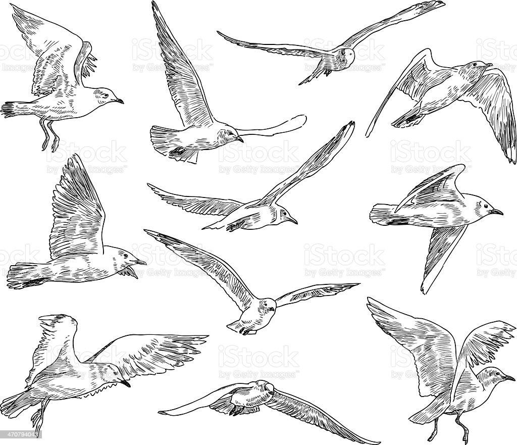 flock of gulls vector art illustration
