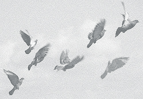 Flock of pigeons flying
