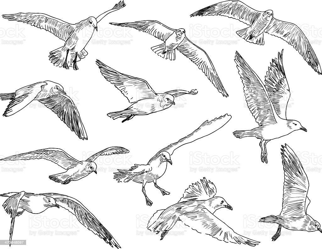 flock of seagulls vector art illustration