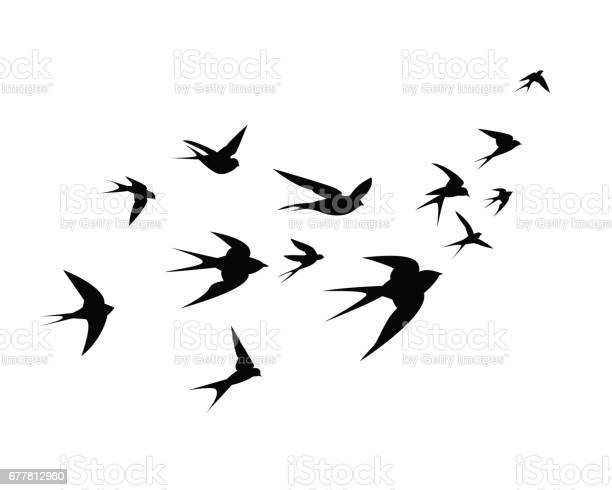 Flock of swallow birds go up vector id677812980?b=1&k=6&m=677812980&s=612x612&h=i96j8ura molq ly5732ipntx91zybi8zrrmomisiwu=