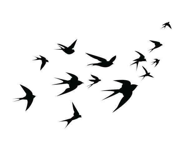 a flock of swallow birds go up - birds stock illustrations