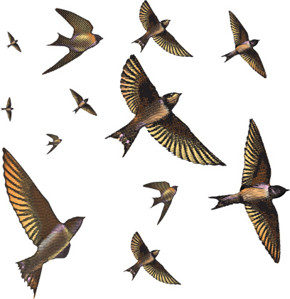 Detailed engraving-styled vector illustration of swallows darting and soaring in the sky.