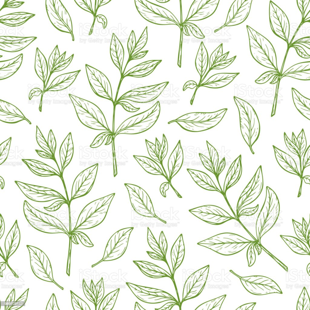 Floral Background Leaves Seamless Pattern Henna Plant Vector Leaf