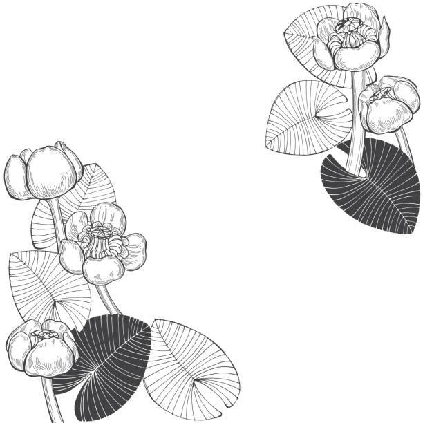 blumenkarte mit blüten der seerosen. vektor-illustration auf weißem hintergrund mit platz für text. einladung, grußkarte oder ein element für ihr design. - seerosenteich stock-grafiken, -clipart, -cartoons und -symbole