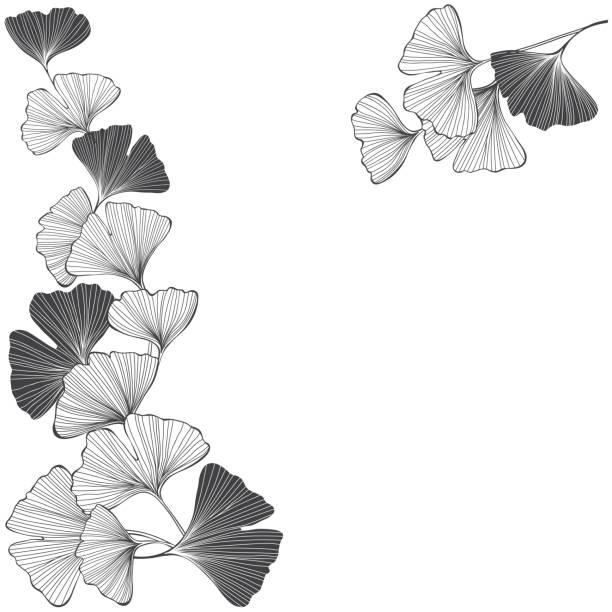 Floral background with ginkgo biloba on a white background. Vector illustration with place for text. Greeting card, invitation or isolated elements for design. Ginkgo biloba. Vector illustration. Invitation, greeting card or an element for your design. ginkgo stock illustrations
