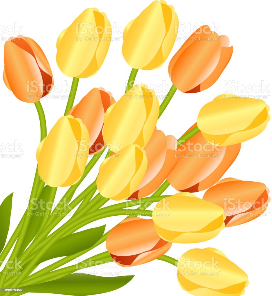 Floral background with tulips royalty-free stock vector art