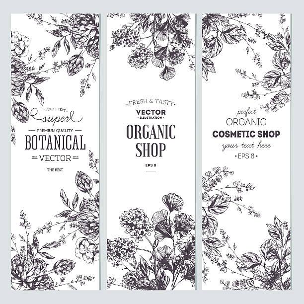 illustrazioni stock, clip art, cartoni animati e icone di tendenza di raccolta banner floreale. negozio di prodotti biologici. illustrazione vettoriale - erboristeria