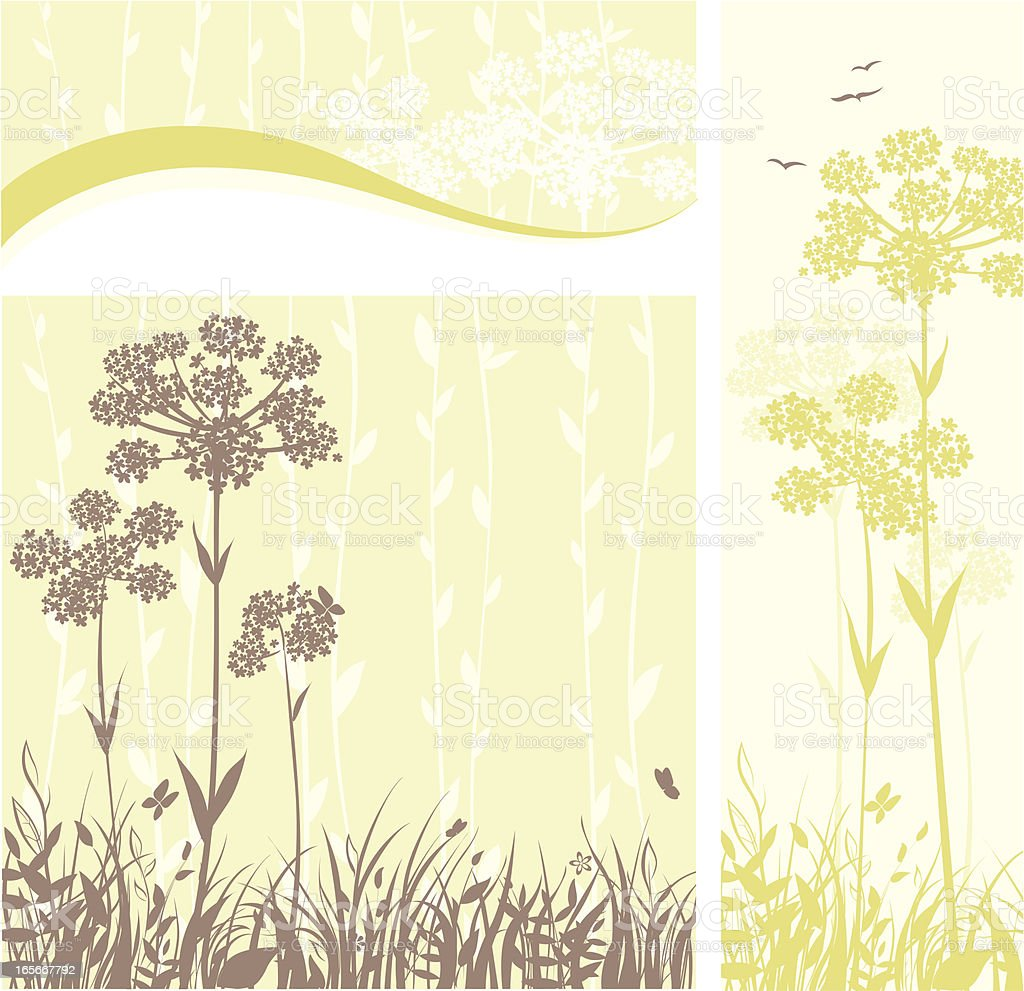 Floral banners - Anise flowers vector art illustration
