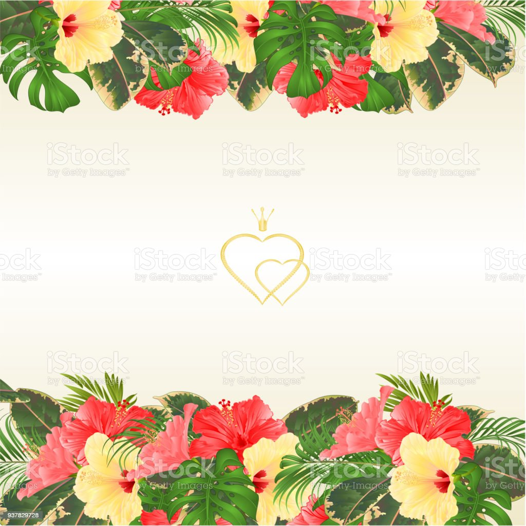 Floral border with blooming various hibiscus and tropical leaves floral border with blooming various hibiscus and tropical leaves vector illustration flower background with place for kristyandbryce Image collections