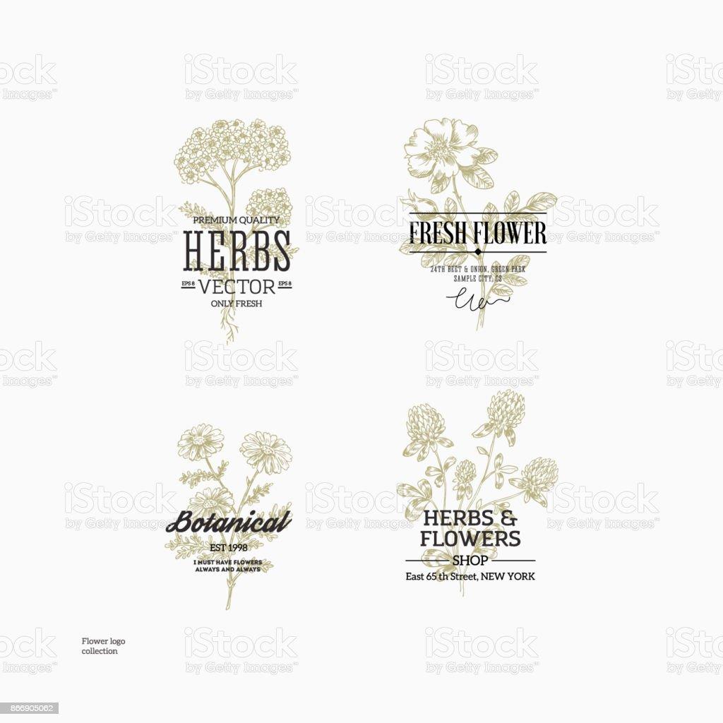 Ilustracion De Coleccion Logo Botanica Floral Ilustracion De Flores