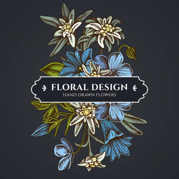 stockillustraties, clipart, cartoons en iconen met floral bouquet dark design met edelweiss, weide geranium, gentiana - gentiaan