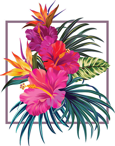floral bouquet with frame. Bouquet with hibiscus and bird of paradise flowers with pink petals, tropical leaves, and floral elements on the white background. Watercolor with summer garden and wild flowers. design frame with vector botanical elements. box frame. bird of paradise plant stock illustrations