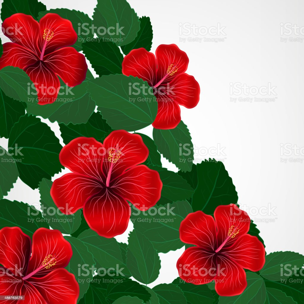 Floral Design Background Hibiscus Flowers Stock Vector Art More