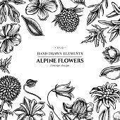 Floral design with black and white bellflower, edelweiss, globethistle, globeflower, meadow geranium, gentiana stock illustration