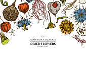 Floral design with colored black caraway, feather grass, helichrysum, lotus, lunaria, physalis stock illustration