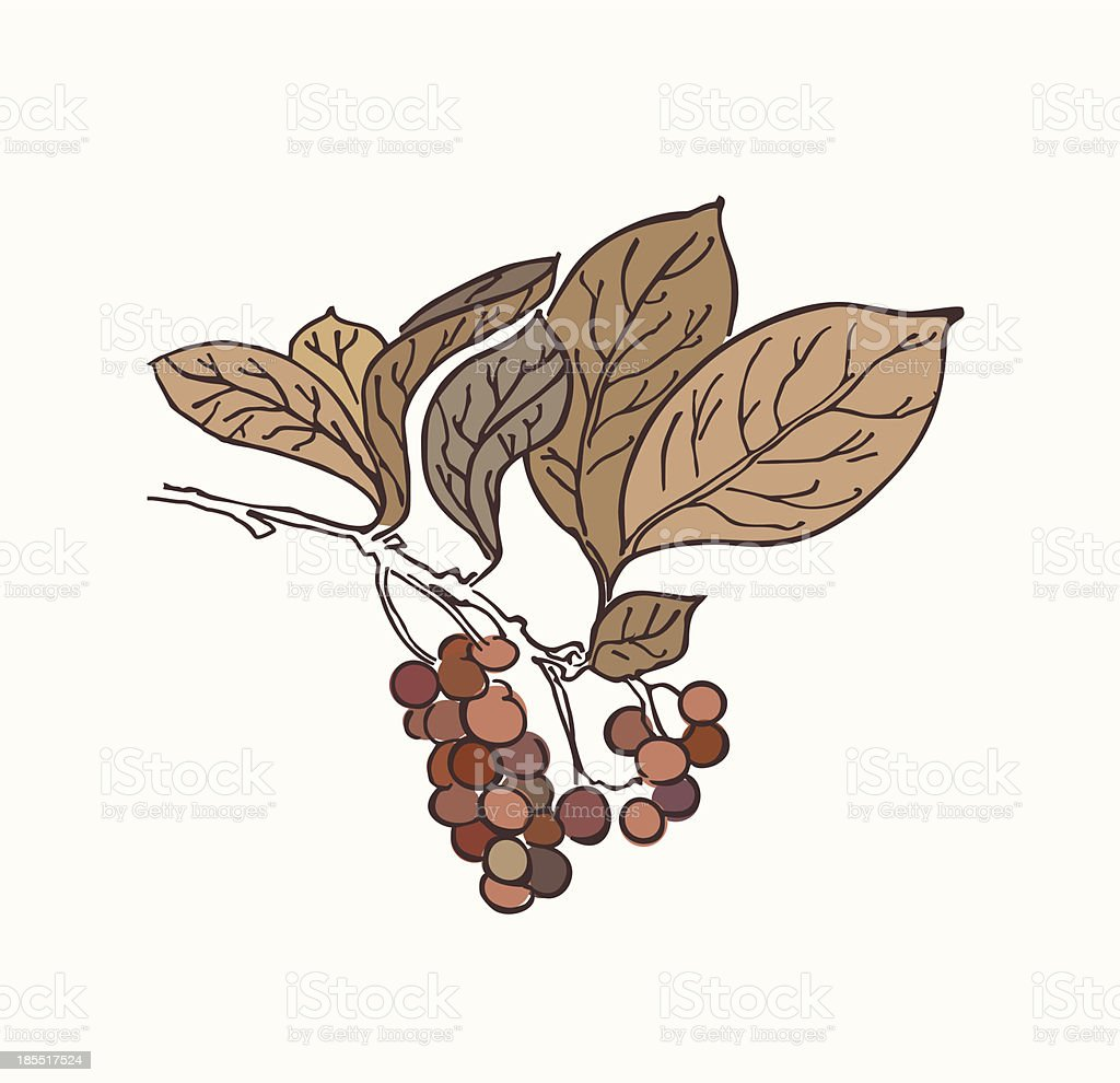 Floral element with leafs, berries. Branch royalty-free stock vector art