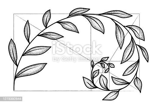 istock Floral fibonacci spiral. Sketch of  harmony concept, golden ratio. Vector illustration 1273392544
