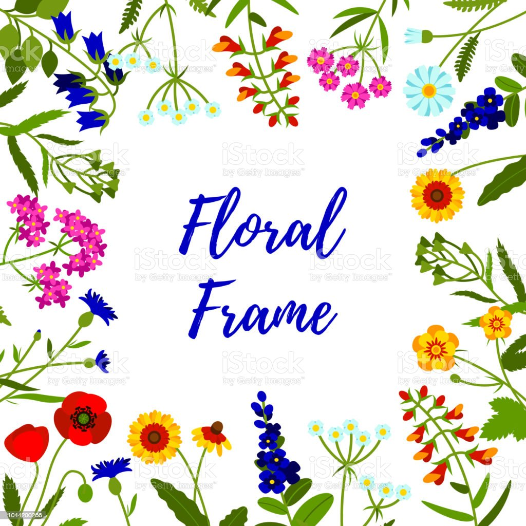 Floral frame of wild flowers. Field flowers background. Vector illustration. Space for text