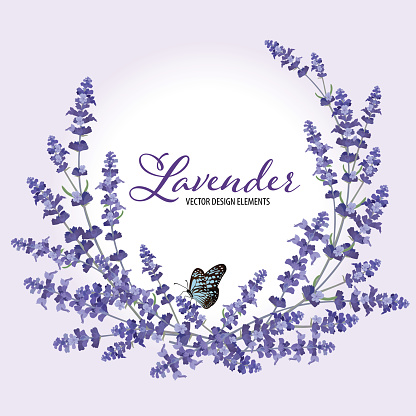Floral frame with autumn lavender flowers with butterfly on violet background.