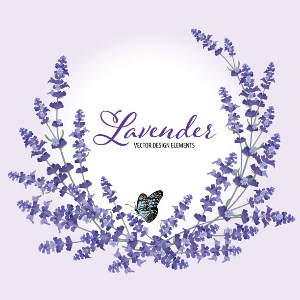 Floral frame with autumn lavender flowers with butterfly on violet background. Floral frame with autumn lavender flowers with butterfly on violet background. Vector set of blooming floral for wedding invitations and greeting card design. violet flower stock illustrations