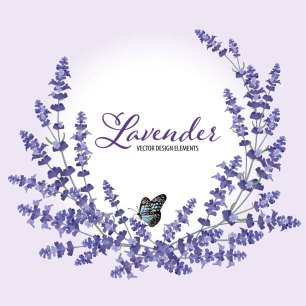 illustrazioni stock, clip art, cartoni animati e icone di tendenza di floral frame with autumn lavender flowers with butterfly on violet background. - farfalla ramo