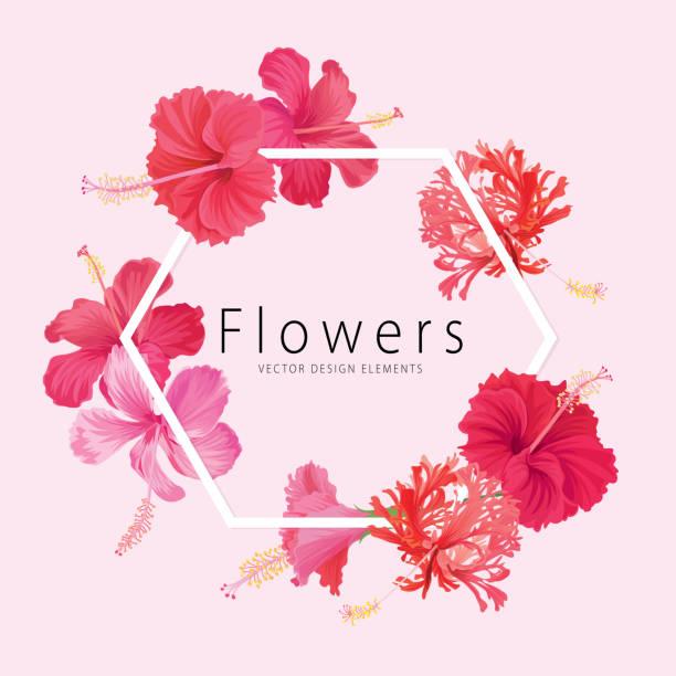 blumenrahmen mit beautifu hibiscus syriacus blumen auf rosa hintergrundvorlage. - hibiskusgarten stock-grafiken, -clipart, -cartoons und -symbole