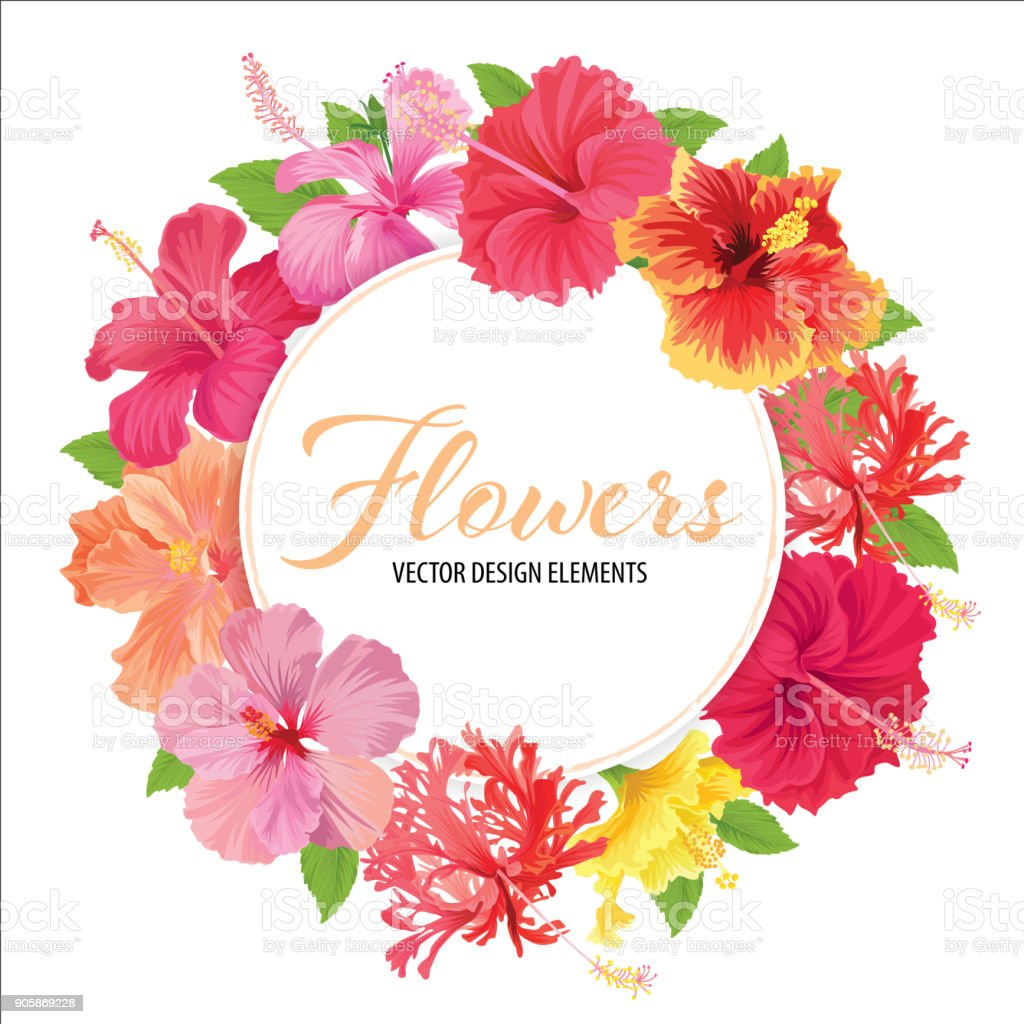 Floral frame with beautiful hibiscus flowers on white background floral frame with beautiful hibiscus flowers on white background template royalty free floral frame izmirmasajfo