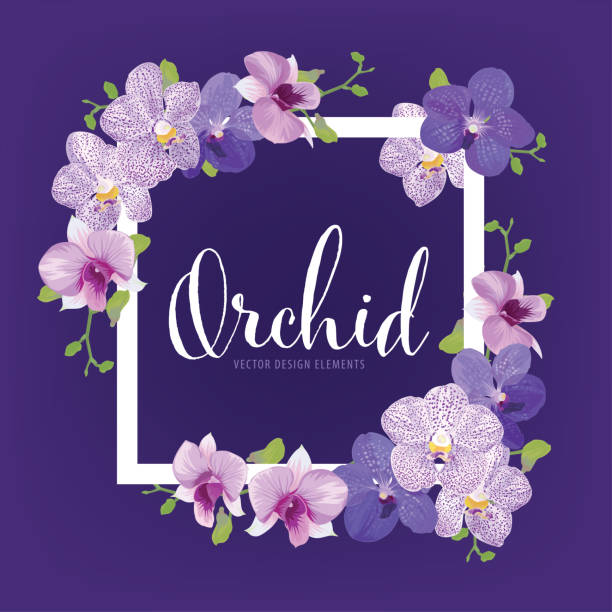 Floral frame with tropical orchid flowers on purple background template. Floral frame with tropical orchid flowers on purple background template. Vector set of blooming floral for holiday invitations, greeting card and fashion design. orchid stock illustrations