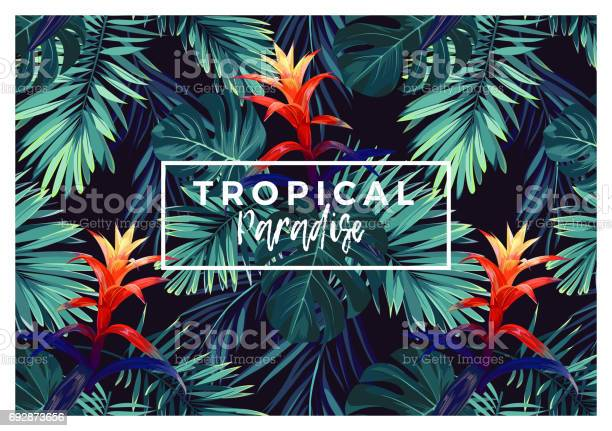 Floral horizontal postcard design with guzmania flowers monstera and vector id692873656?b=1&k=6&m=692873656&s=612x612&h=bmxizc4a14vfz7zku55arta7 e9aytn2dqcpamoisn8=
