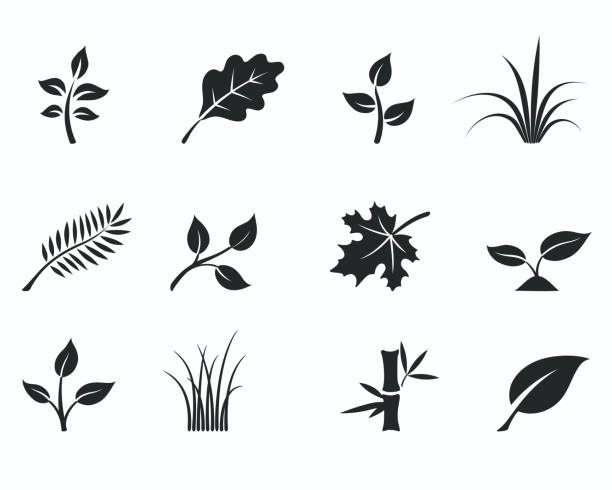 floral icon set Vector illustration of black monochrome floral icon set with silhouettes of herbs, grass and leaves maple leaf illustrations stock illustrations