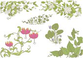 Various vines and undergrowth, jasmine, ivy, violets, and gloriosa or glory lily.