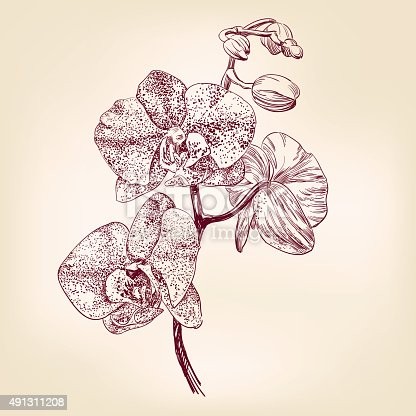 floral orchid hand drawn vector llustration realistic sketch