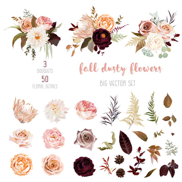 Floral pastel watercolor style big vector collection Dusty orange and creamy antique rose, beige and pale flowers, fern, creamy dahlia, ranunculus, protea, fall leaves big vector collection. Floral pastel watercolor style bouquets. Isolated and editable flowers stock illustrations