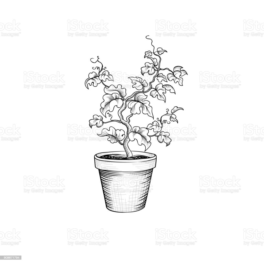 Floral pot. Decorative bonsai tree isolated. Plant with leaves - illustrazione arte vettoriale
