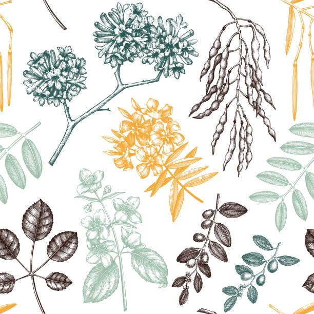 florales nahtloses muster. gartenbäume. - robinie stock-grafiken, -clipart, -cartoons und -symbole