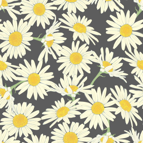 Floral seamless pattern with camomile. Floral seamless pattern with camomile. Cute white flowers. Summer concept. Design element for textile, fabrics, scrapbooking, wallpaper and etc. Vector illustration. daisy stock illustrations