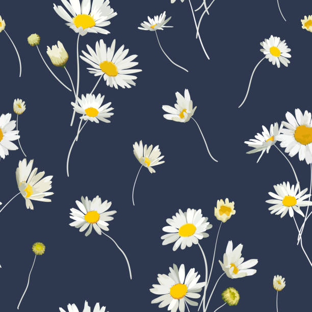 Floral Seamless Pattern with Chamomile Flowers. Natural Background with Daisy Flowers for Spring Summer Design Wallpaper, Decoration, Print. Vector illustration Floral Seamless Pattern with Chamomile Flowers. Natural Background with Daisy Flowers for Spring Summer Design Wallpaper, Decoration, Print. Vector illustration daisy stock illustrations