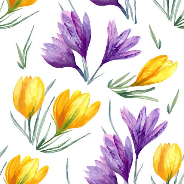 illustrations, cliparts, dessins animés et icônes de fond vectorielle continue floral avec fleur violette de crocus jaune sur blanc - crocus