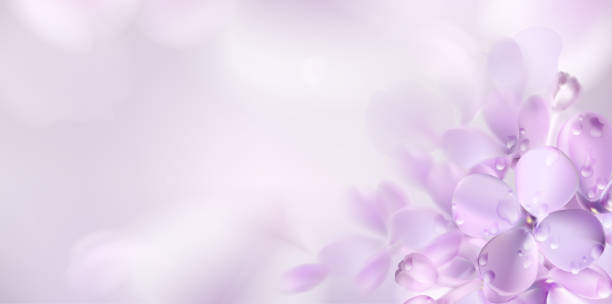 Floral spring background with purple lilac flowers Floral background with soft pink lilac flower and petals vector illustration template violet flower stock illustrations