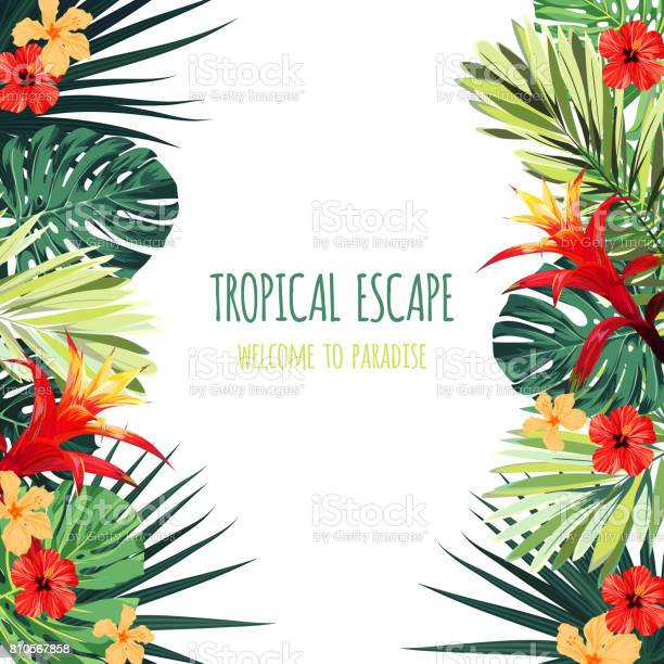Floral square postcard design with guzmania and hibiscus flowers and vector id810567858?b=1&k=6&m=810567858&s=612x612&h=etdbm0dznjcswp3xkm5m2cad8shpvogr0mkflo w6z0=