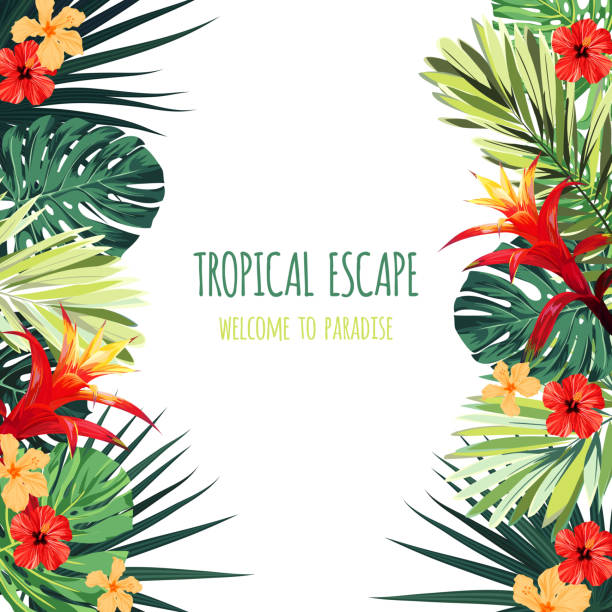 Floral square postcard design with guzmania and hibiscus flowers, monstera and royal palm leaves. Exotic hawaiian vector background Floral postcard design with guzmania and hibiscus flowers, monstera and royal palm leaves. Exotic hawaiian background. Vector illustration. hawaiian culture stock illustrations
