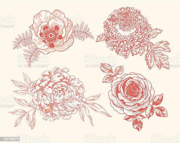 Floral vignettes vector id165766878?b=1&k=6&m=165766878&s=612x612&h=wic hcuxepq dezbs2zfin t qfh c3ghnbvismu6zs=