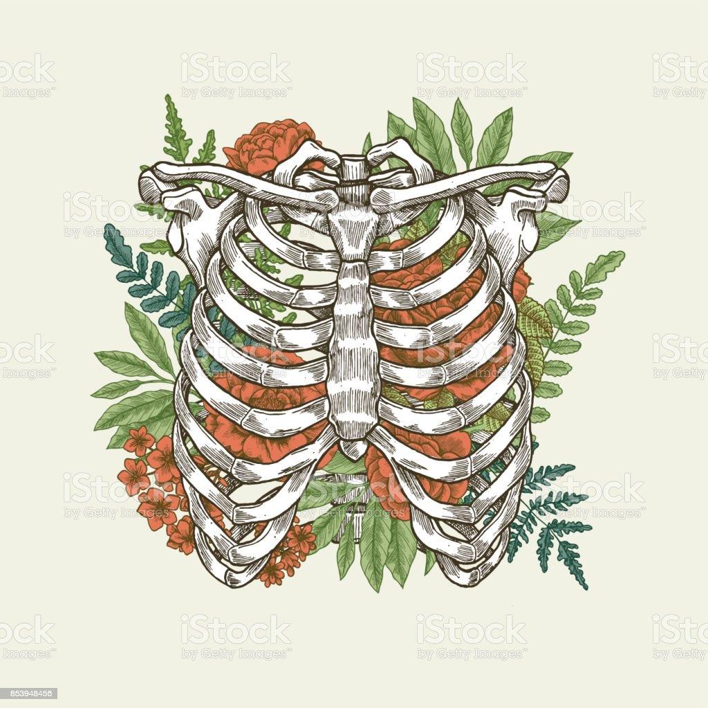 Floral vintage rib cage illustration. Floral anatomy. Vector illustration vector art illustration